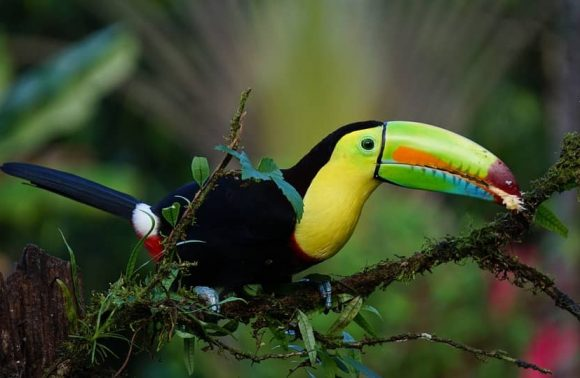 COSTA RICA – SOUS SES 3 ÉLÉMENTS