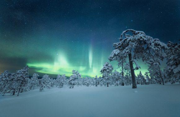 FINLANDE : AU MILIEU DES SAPINS