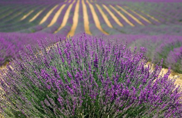 FRANCE – PROVENCE D'EXCEPTION