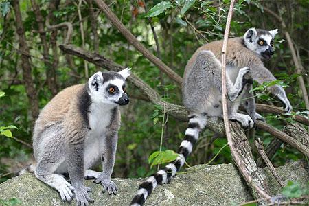 MADAGASCAR EN GROUPE
